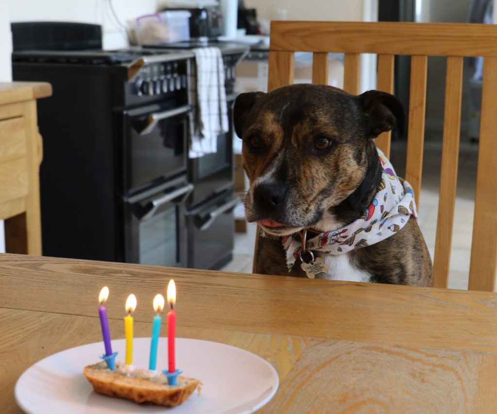 Dog blowing out candles on a cake