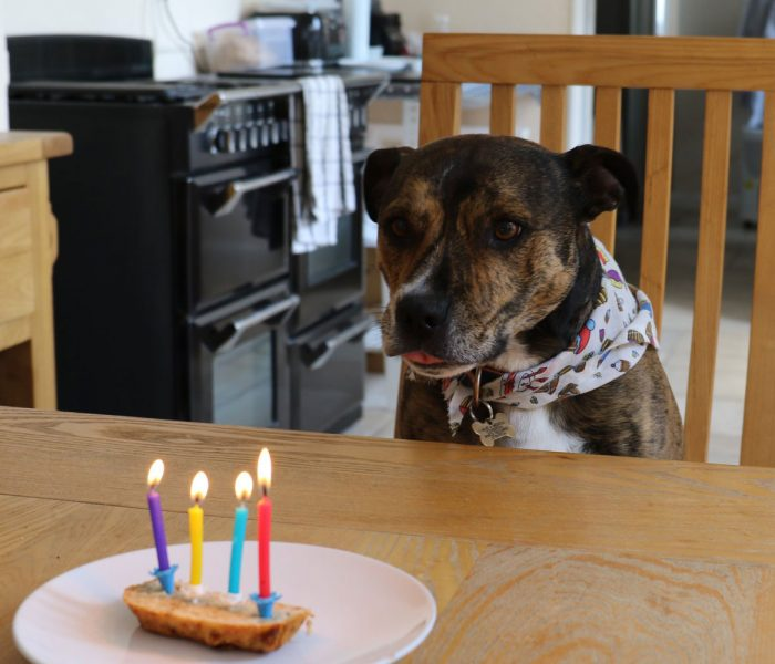 Vegan Dog Birthday Cake | Plant-Based